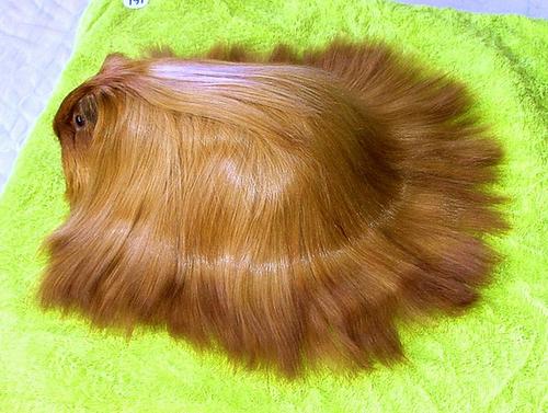 hair_goals