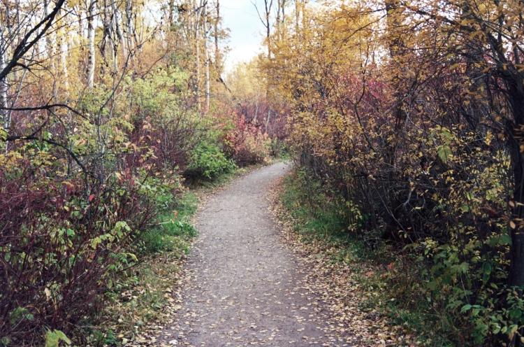 autumn-path_6296380284_o